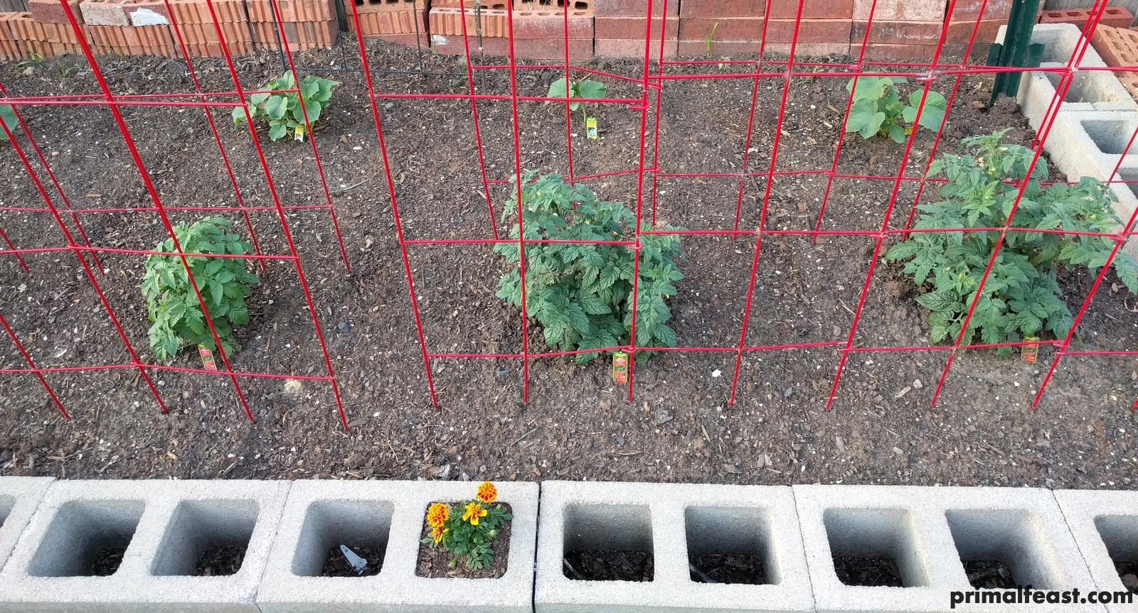2018 0404 tomatoes, cucumbers.jpg