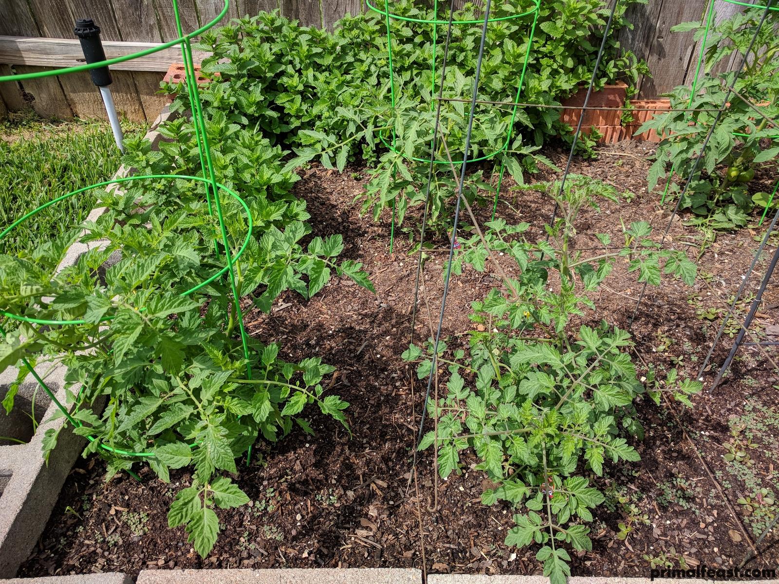 2018 0420 tomatoes 001.jpg