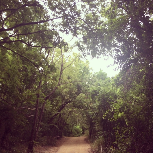 In August, I returned to roots—looking for greenery and trees wherever I could.