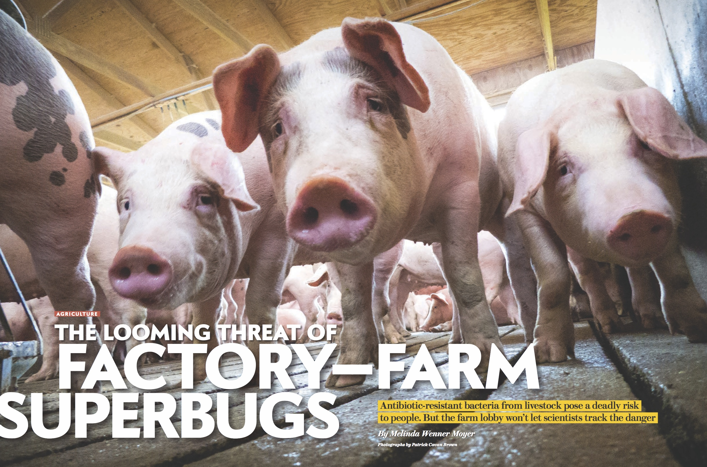 Factory-farm Superbug Threat.jpg