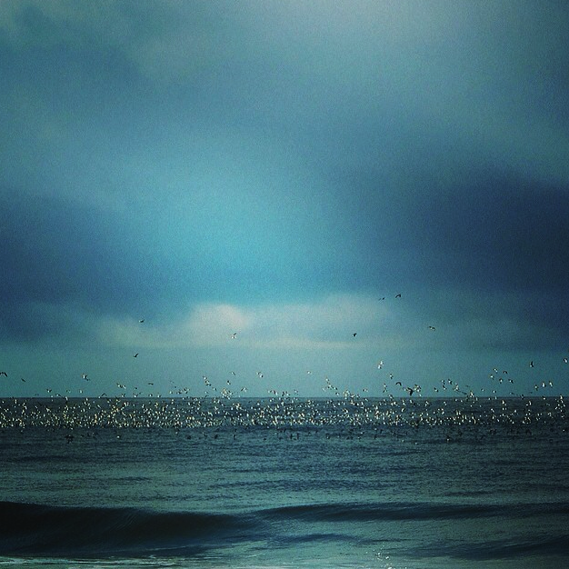 """Another great shot from local photographer and printmaster @maryfostermichel at Beach Tower 26 via Instagram. """"Between the storms, thousands of birds flock for a feeding frenzy on the Pacific. #californiarain,"""" Mary Foster Michel."""