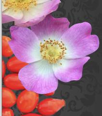 Flower RHSO.png
