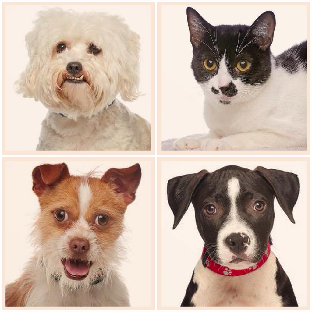 Bruno's Pet Adoption Pets.png