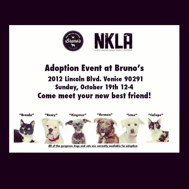 Pet Adoption poster.jpg