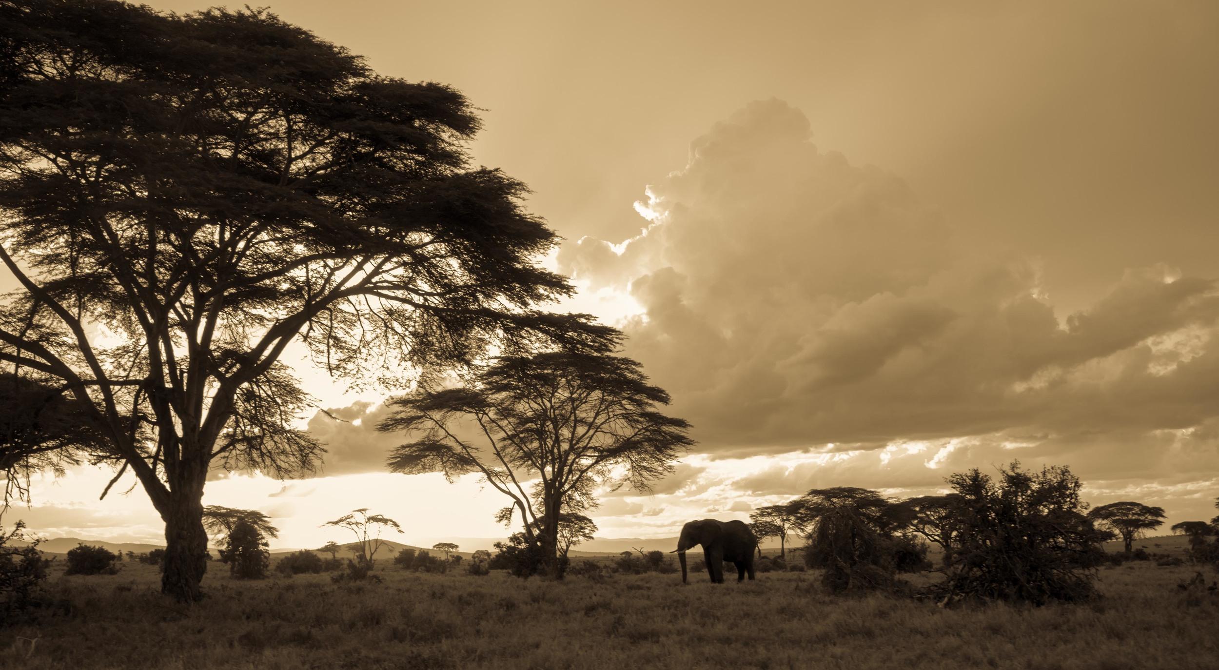 _DSF3257_Kenya.JPG