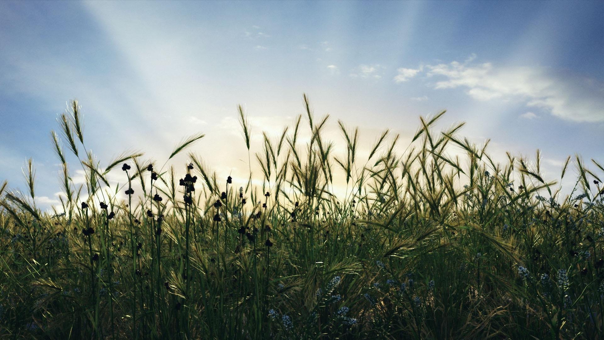 Grass_Field.jpg