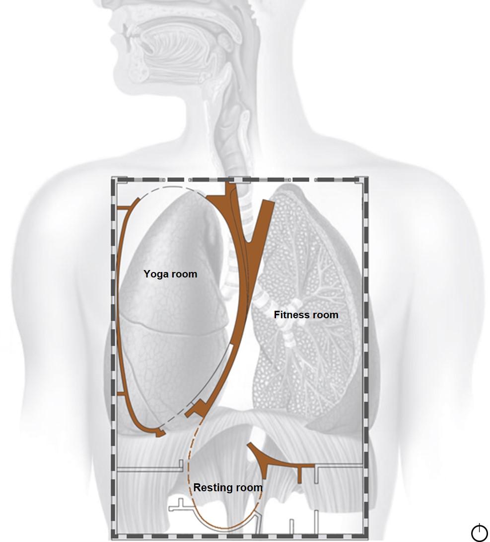 Respiratory System 3_updated.jpg