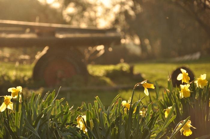 Springtime in the garden 2013
