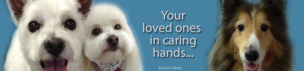 caring_hands_StylaPet.jpg