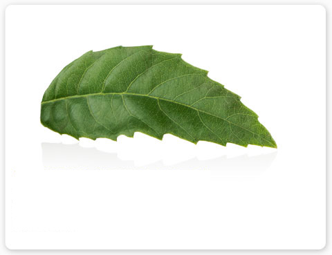 Ylang Ylang plant essence aroma is renowned as an aphrodisiac and is one of many ingredients in Aveda Shampure products.