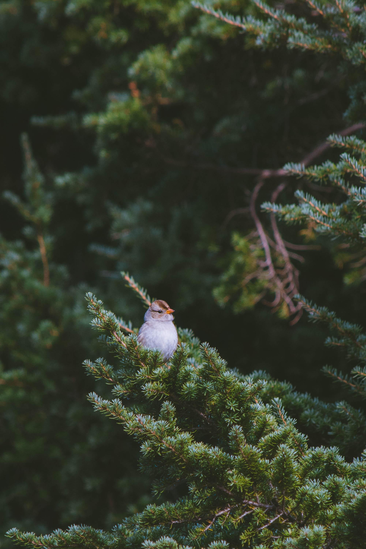 bird-new.jpg