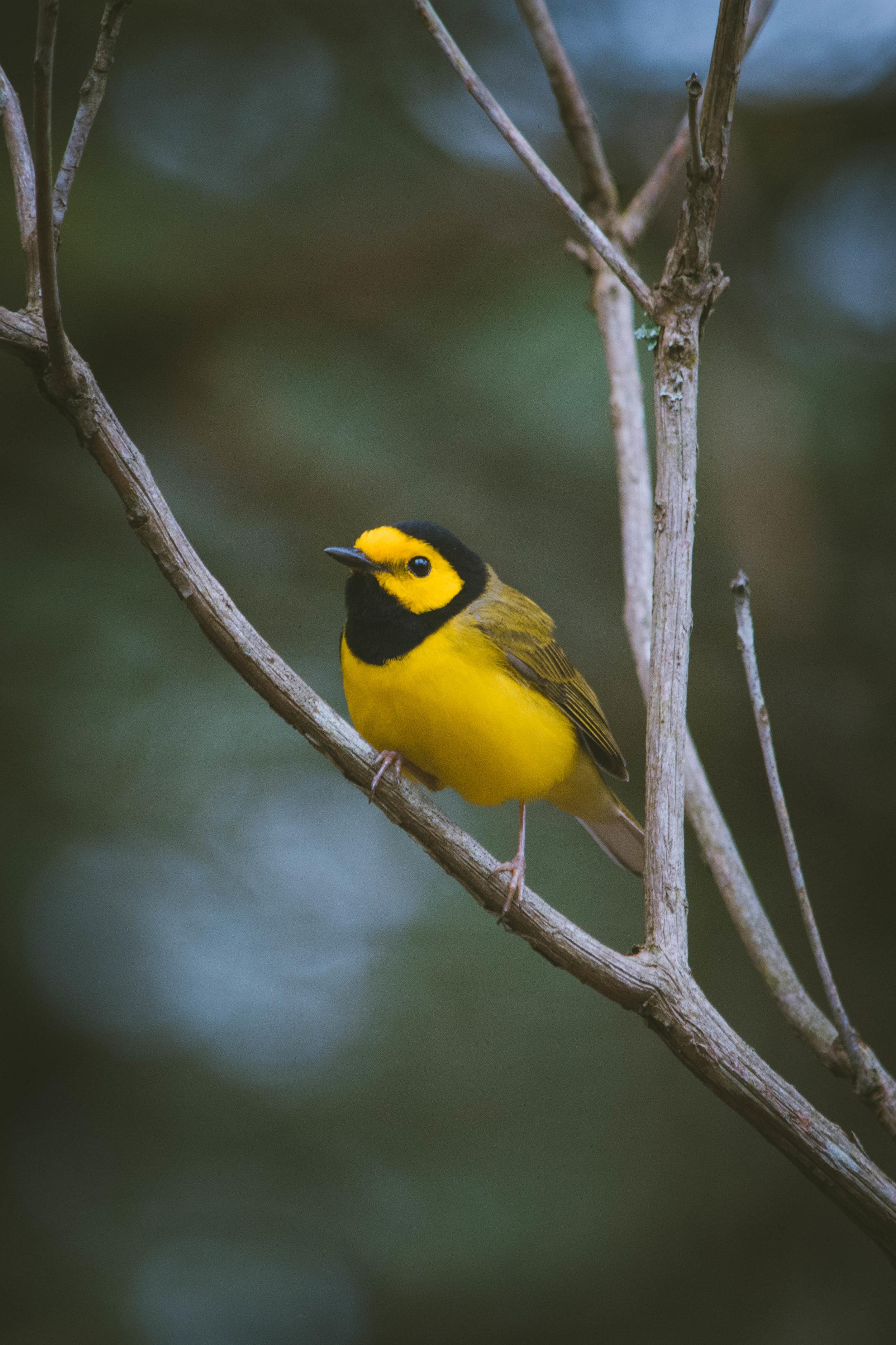 warbler-10.jpg