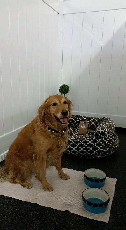 dog-boarding-kennel-kelowna.jpg