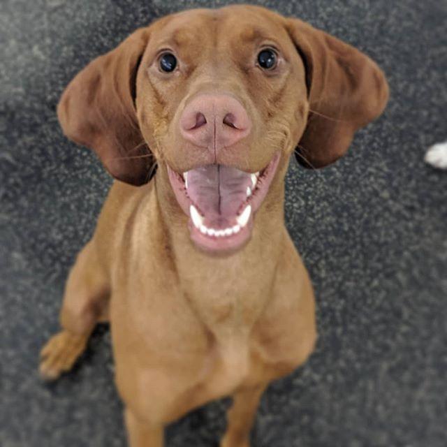 Gorgeous pupper portraits!! We have the cutest friends here at Watson's!! . . . #watsonswim #caninepool #whlswim #watsonshoundlounge #whldog #dogdaycare #dogsofkelowna #instadog #dog #kelownadogs #kelowna #kelownabusiness #playtime #kelownanow -JD