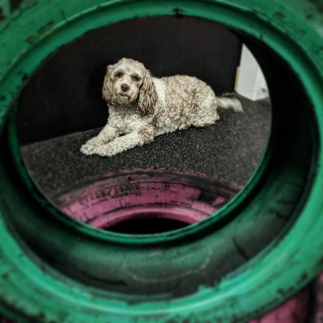 I spy... . . . #watsonswim #caninepool #whlswim #watsonshoundlounge #whldog #dogdaycare #dogsofkelowna #instadog #dog #kelownadogs #kelowna #kelownabusiness #playtime #kelownanow -JD