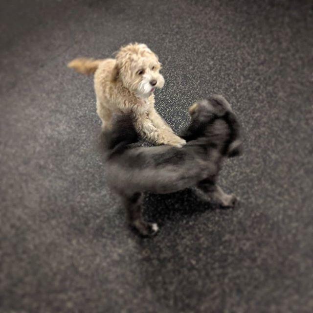 Fast friends, Niko and Miso 💚💚 . . . #watsonswim #caninepool #whlswim #watsonshoundlounge #whldog #dogdaycare #dogsofkelowna #instadog #dog #kelownadogs #kelowna #kelownabusiness #playtime #kelownanow -JD