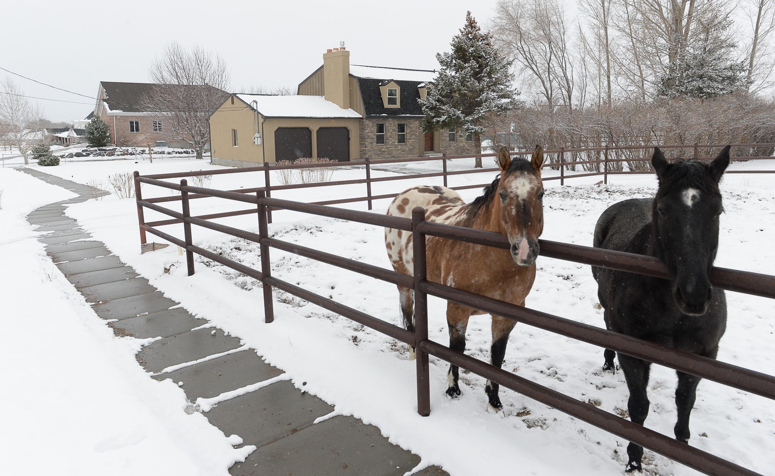 Outside_horses1.jpg