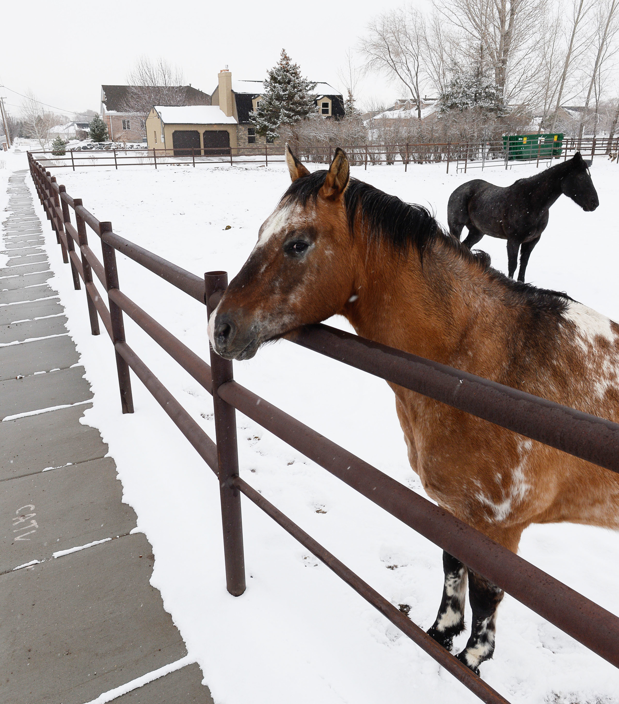 Outside_horses2.jpg