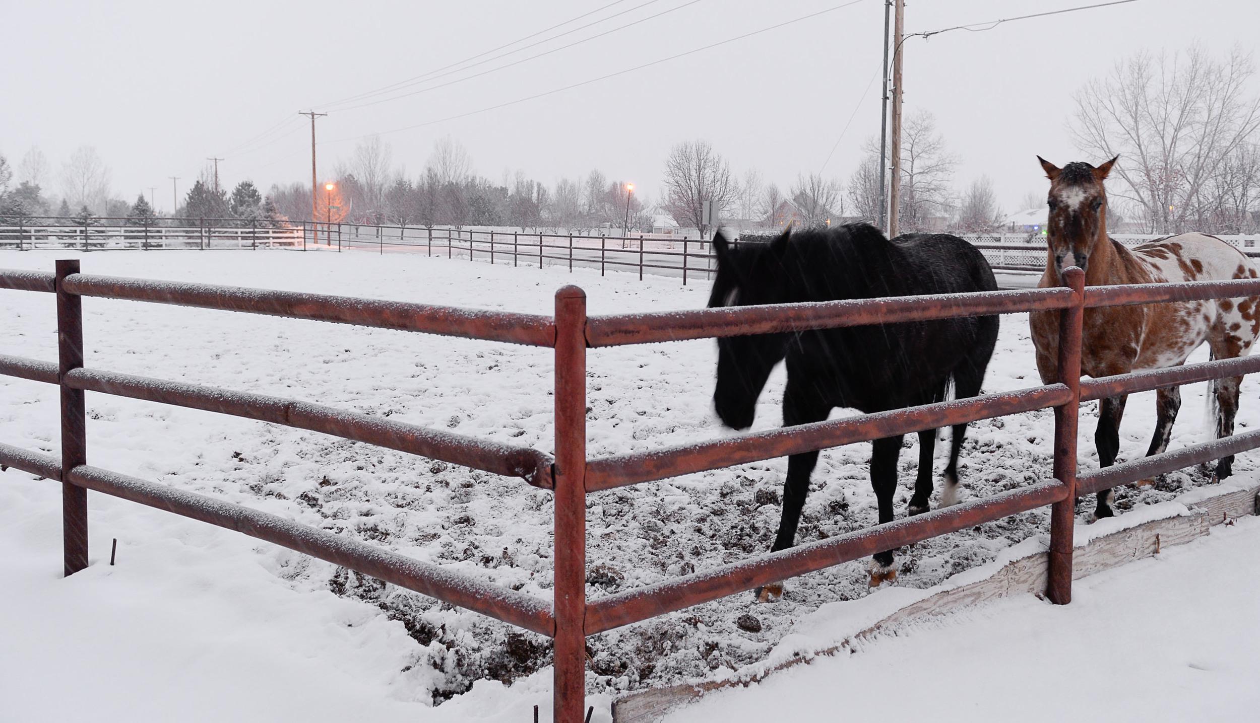 Outside_horses3.jpg