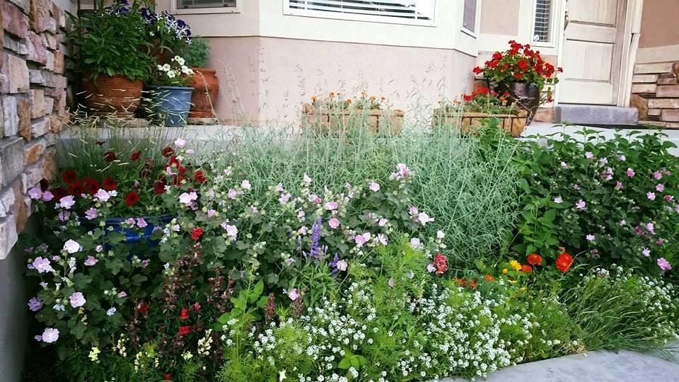 front flowerbed.jpg