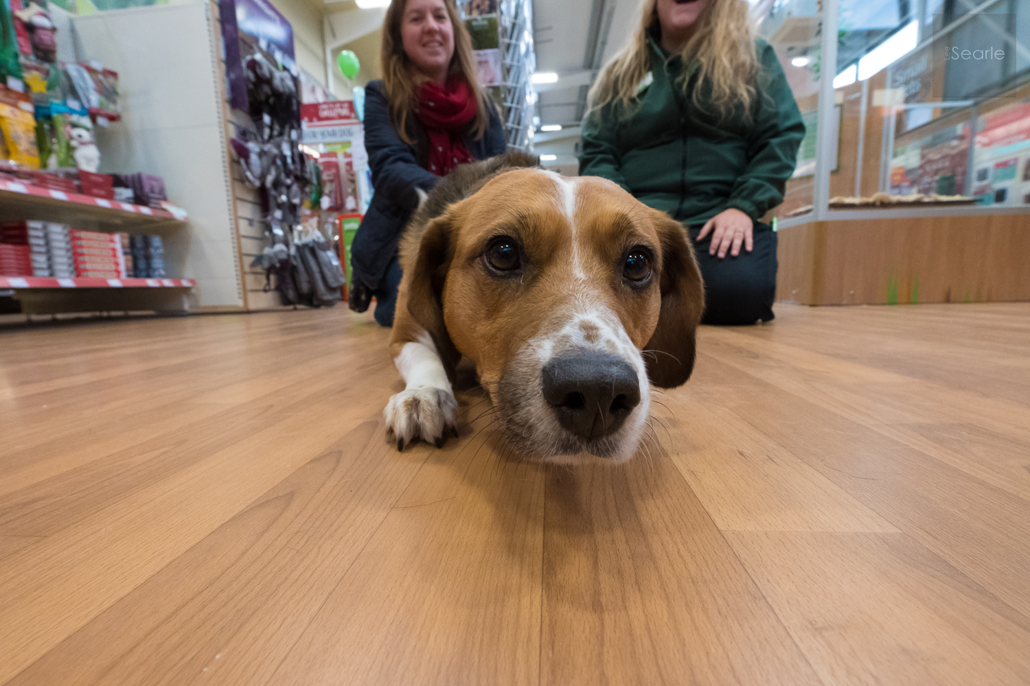 Pets-at-home-launch-penzzance-photography-11.jpg
