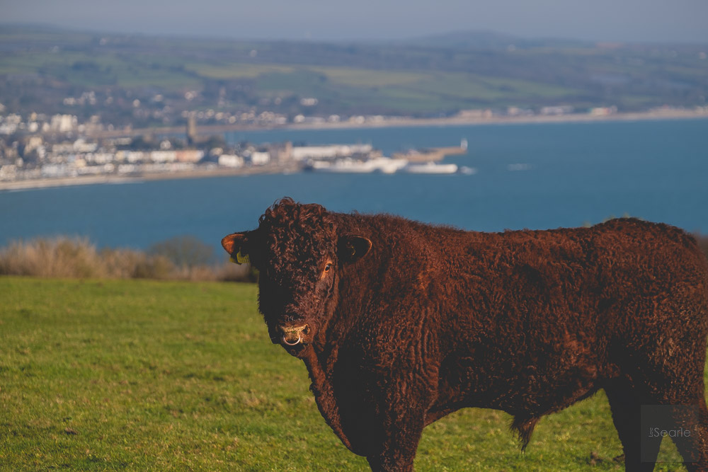 agricultural-photography-cornwall-3.jpg