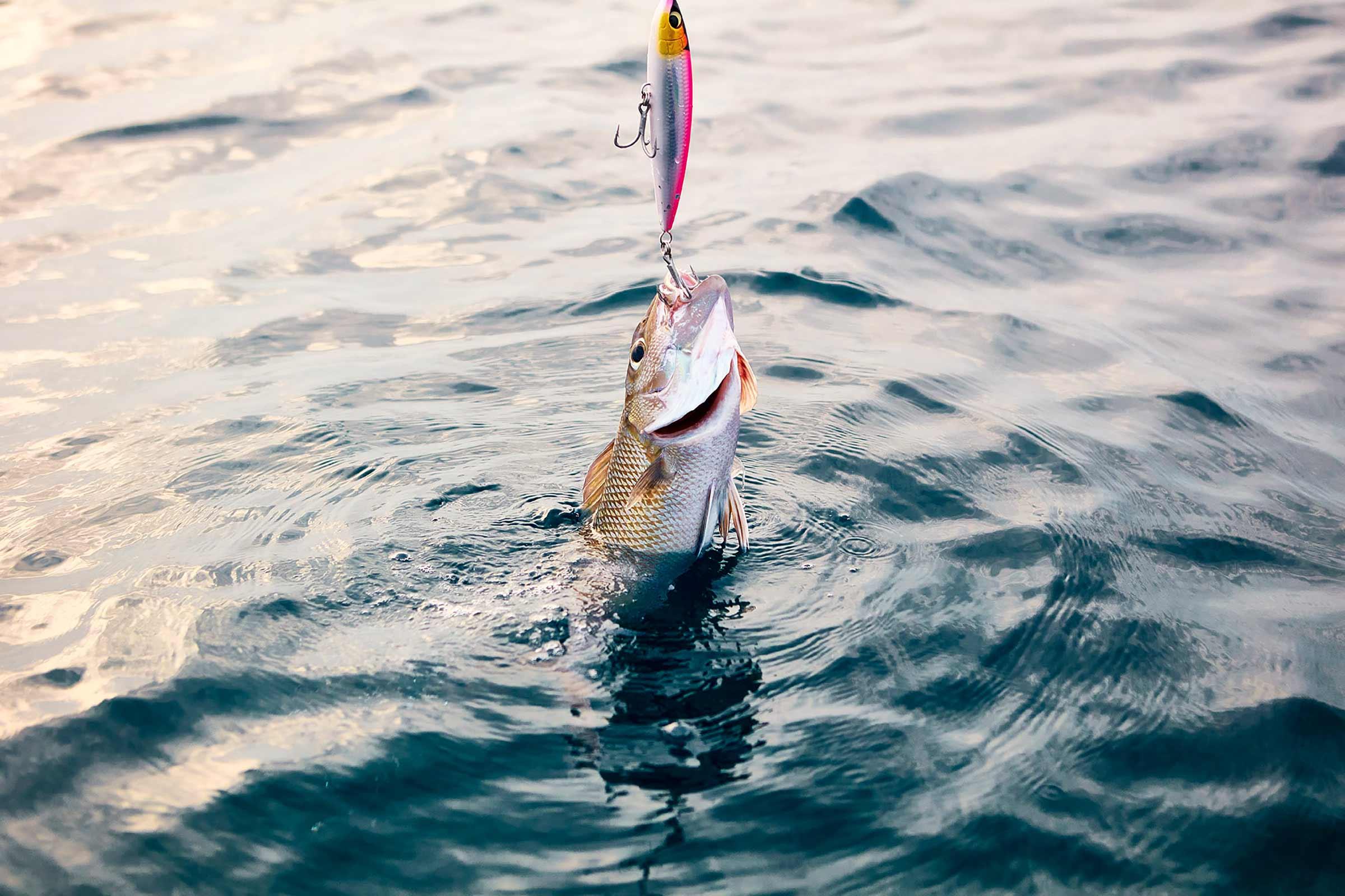 OO_ReethiRah_Fishing_7.jpg