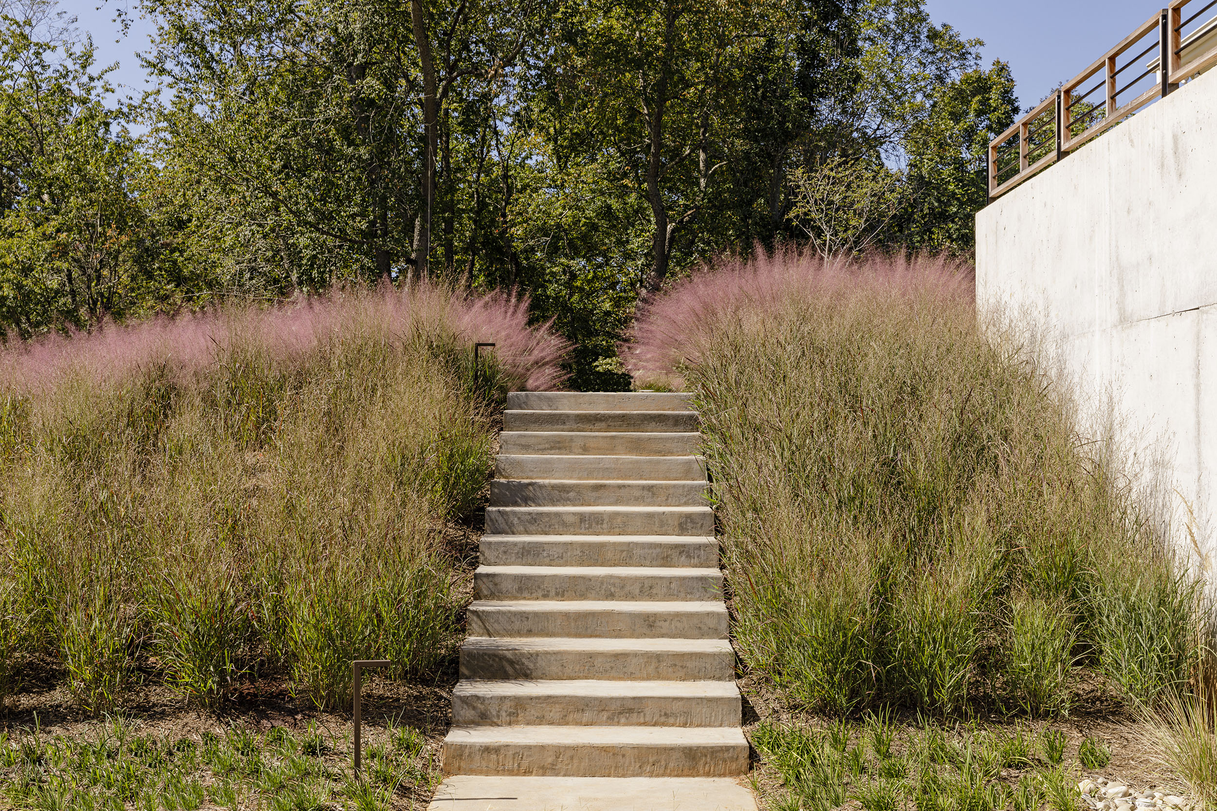 Grounded_stair_muhly-grass_landscape-architecture-virginia.jpg