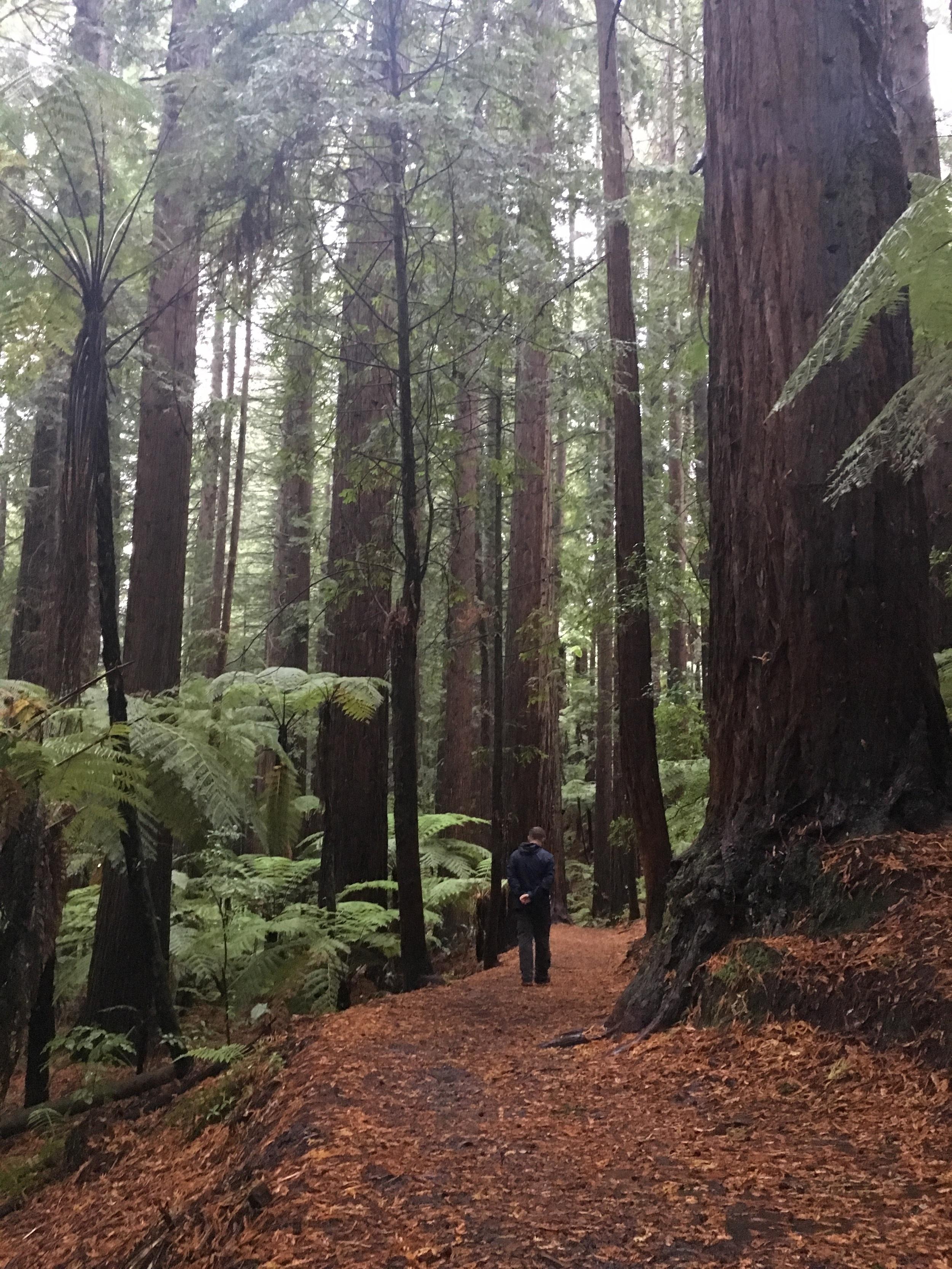 Pondering California in New Zealand