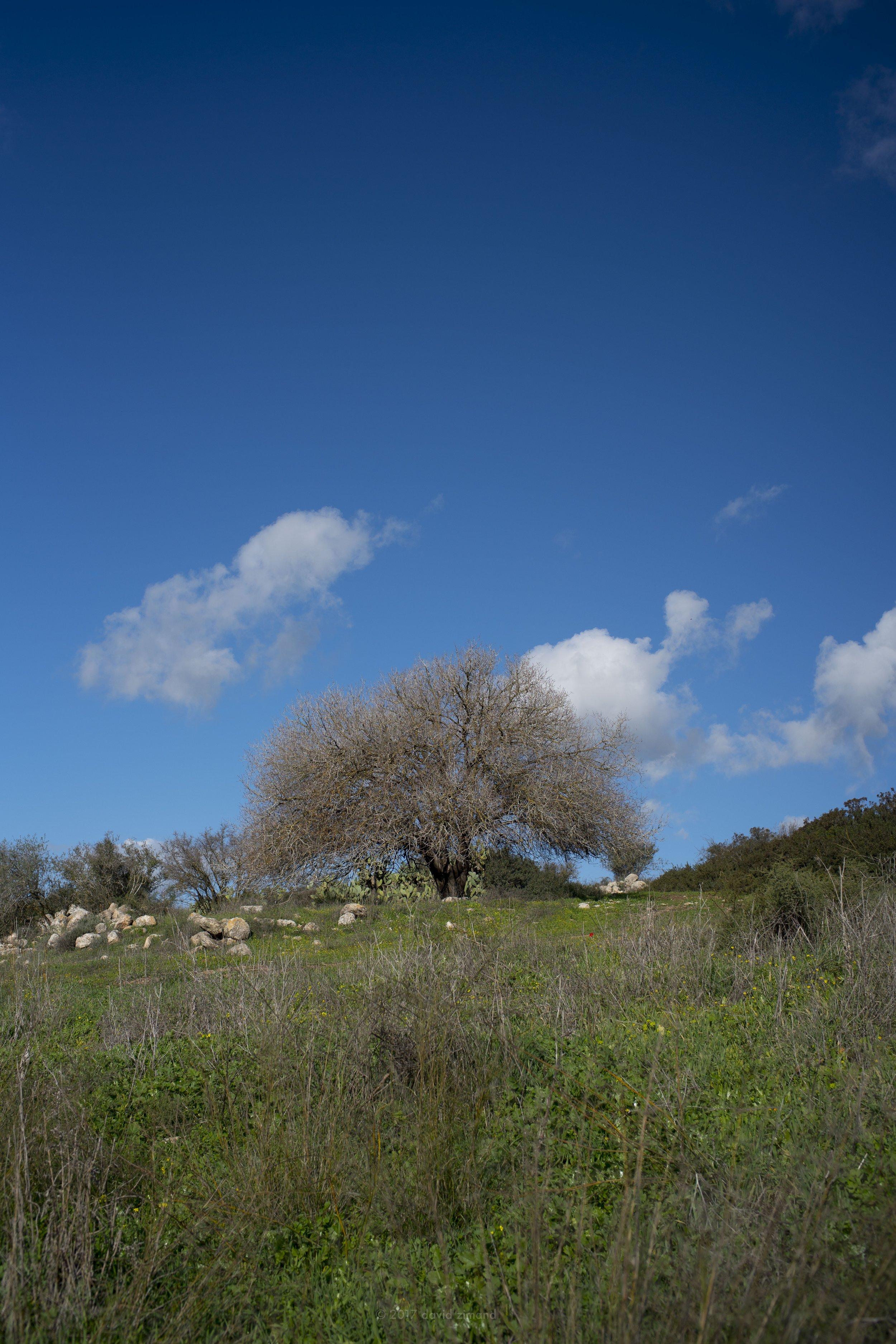 Judaen Hills