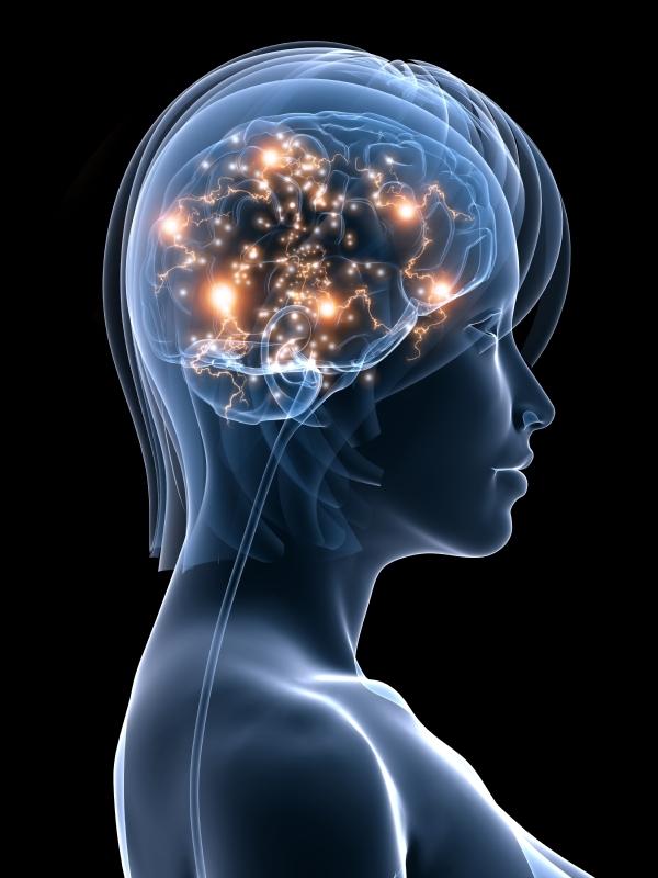 Your brain on meditation.