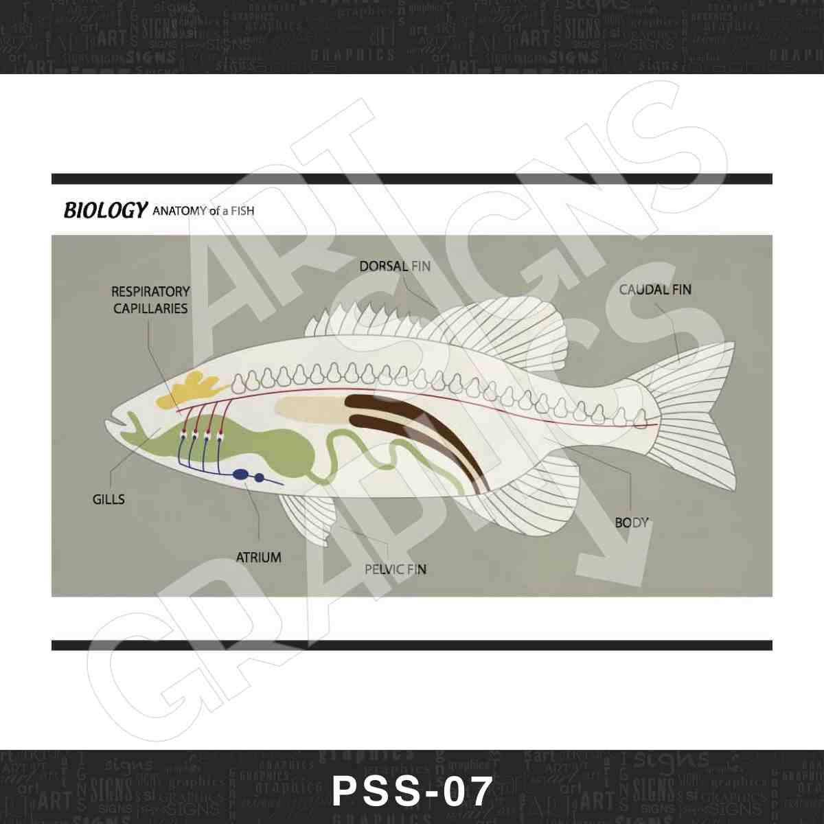 PSS_07_PRINT.jpg