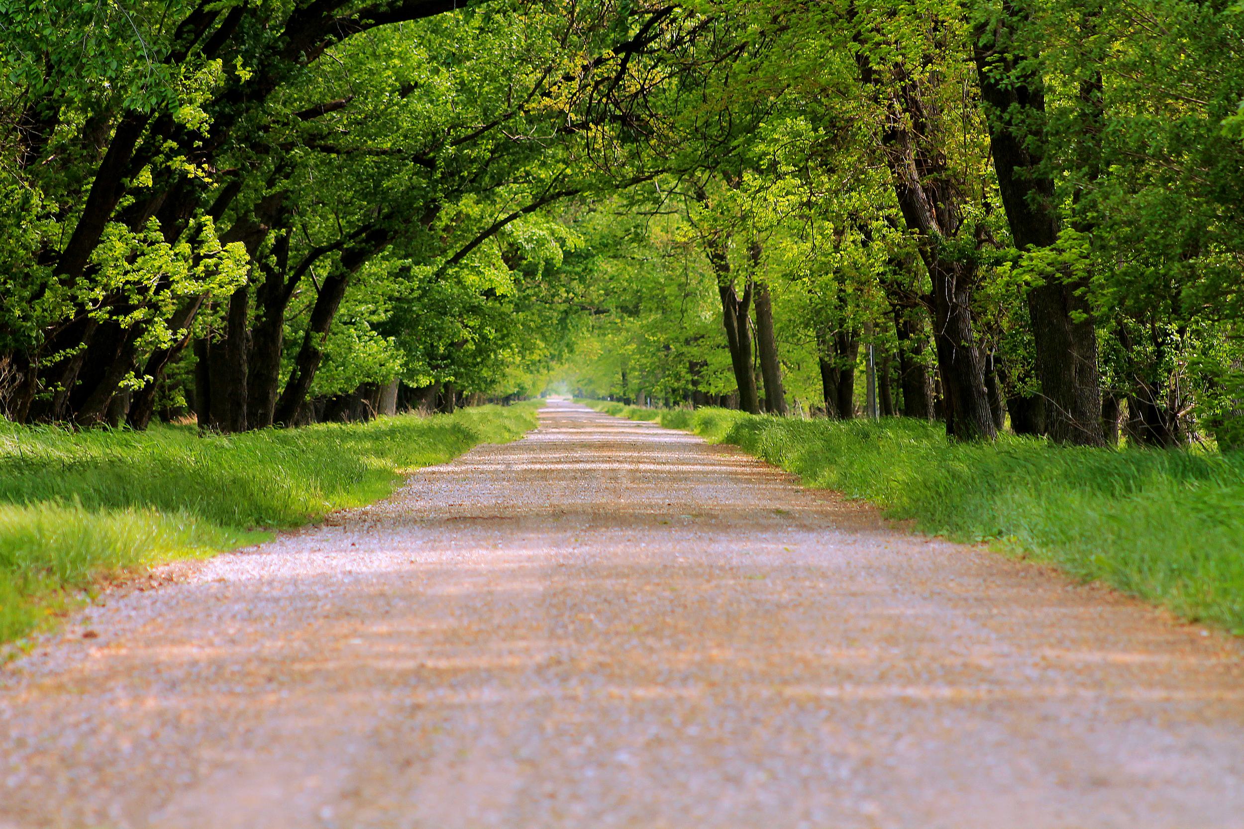 Covered Lane 3.jpg