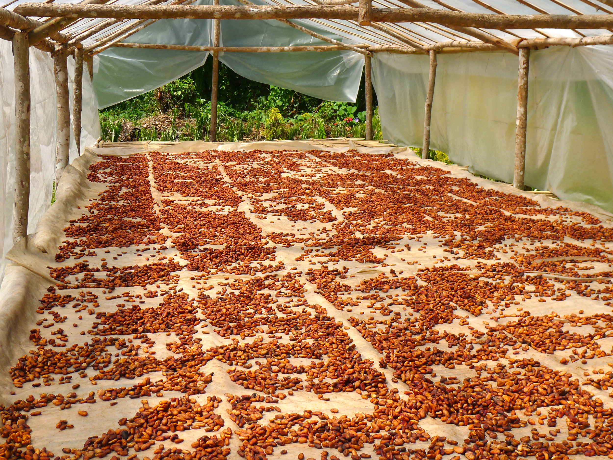 COCOA DRYER.