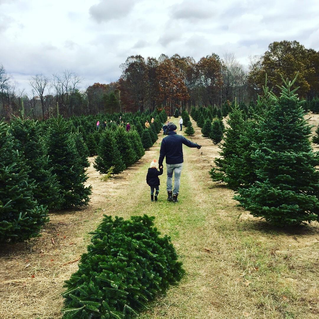 Hart Tree Farm choose and cut.jpg