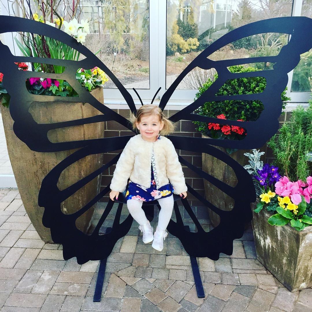 Fredrick Meijer Gardens Butterflies.jpg