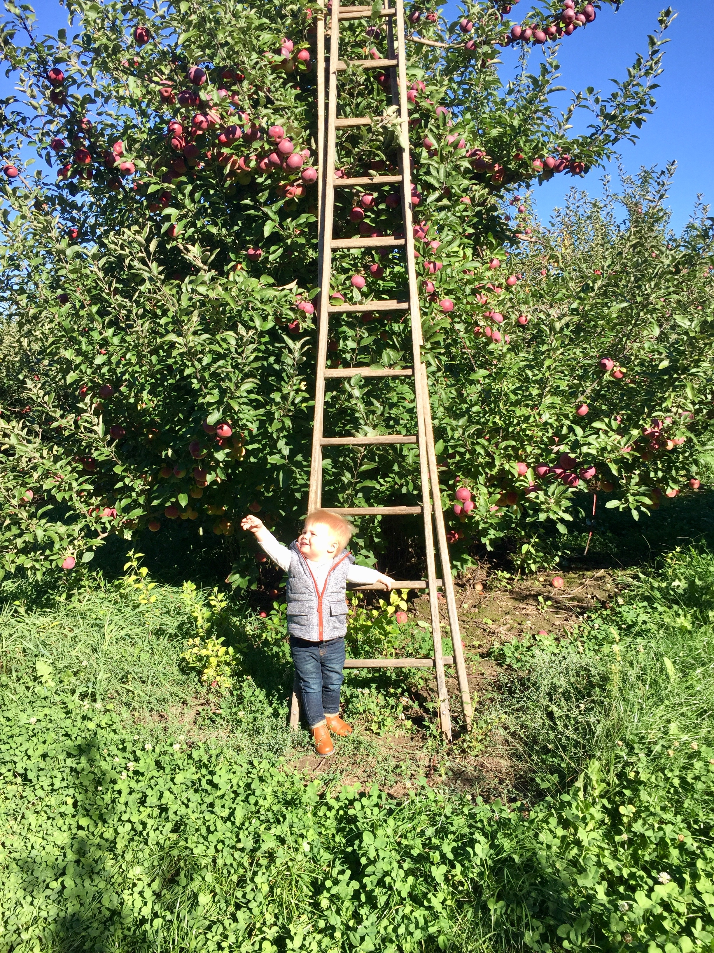 Klackle Orchard Ladder.jpg