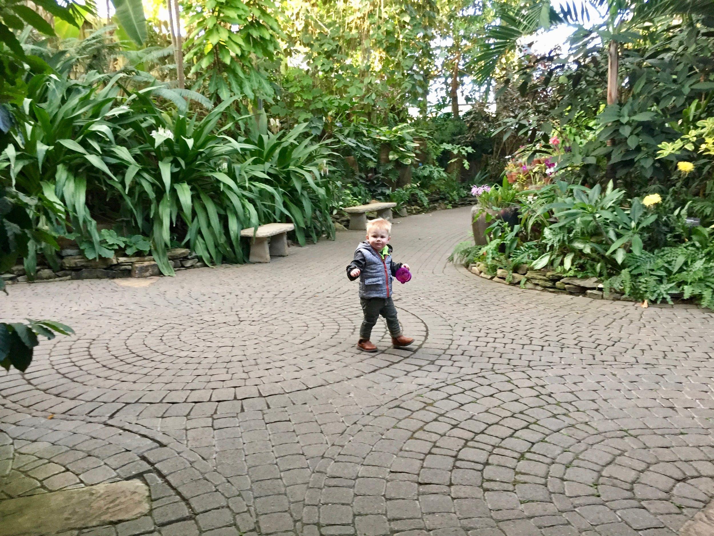 Fredrick Meijer Gardens greenhouse.jpg