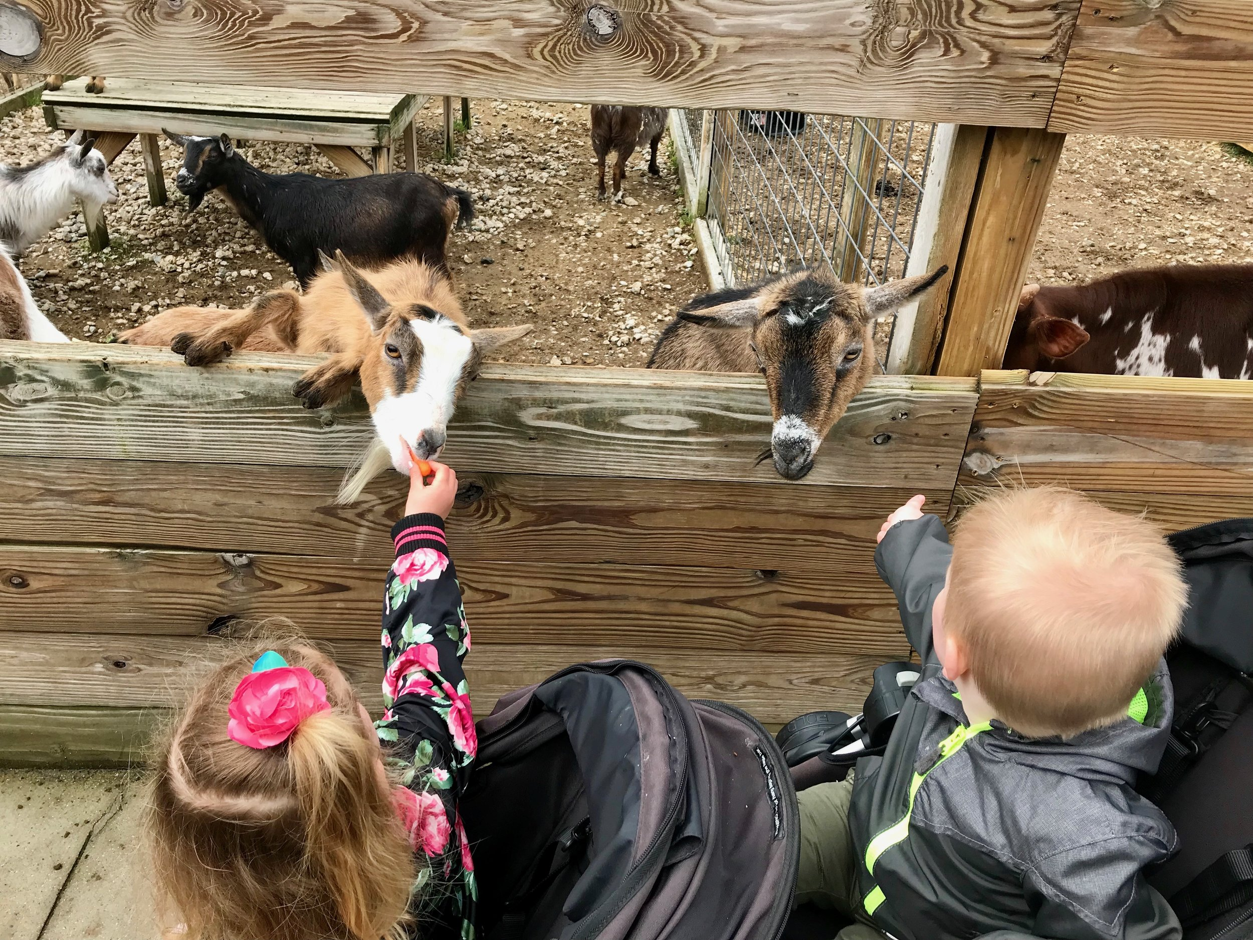Bolder Ridge Animal park feeding goats.jpeg
