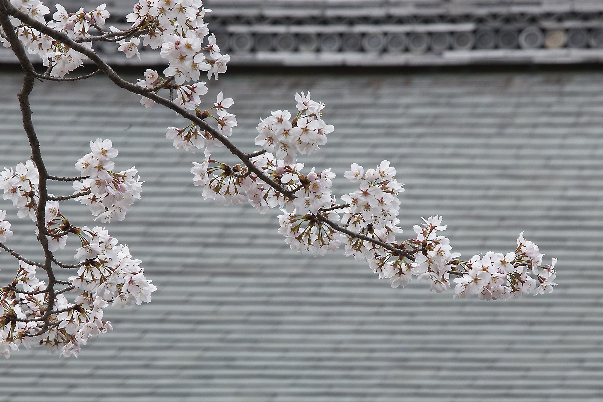 Hiroshima-Kurashiki-Kyoto-March 2014-4_39842.jpg