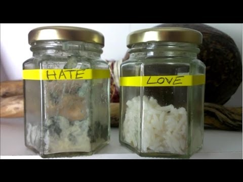 rice-experiments-helloswat-2.jpg