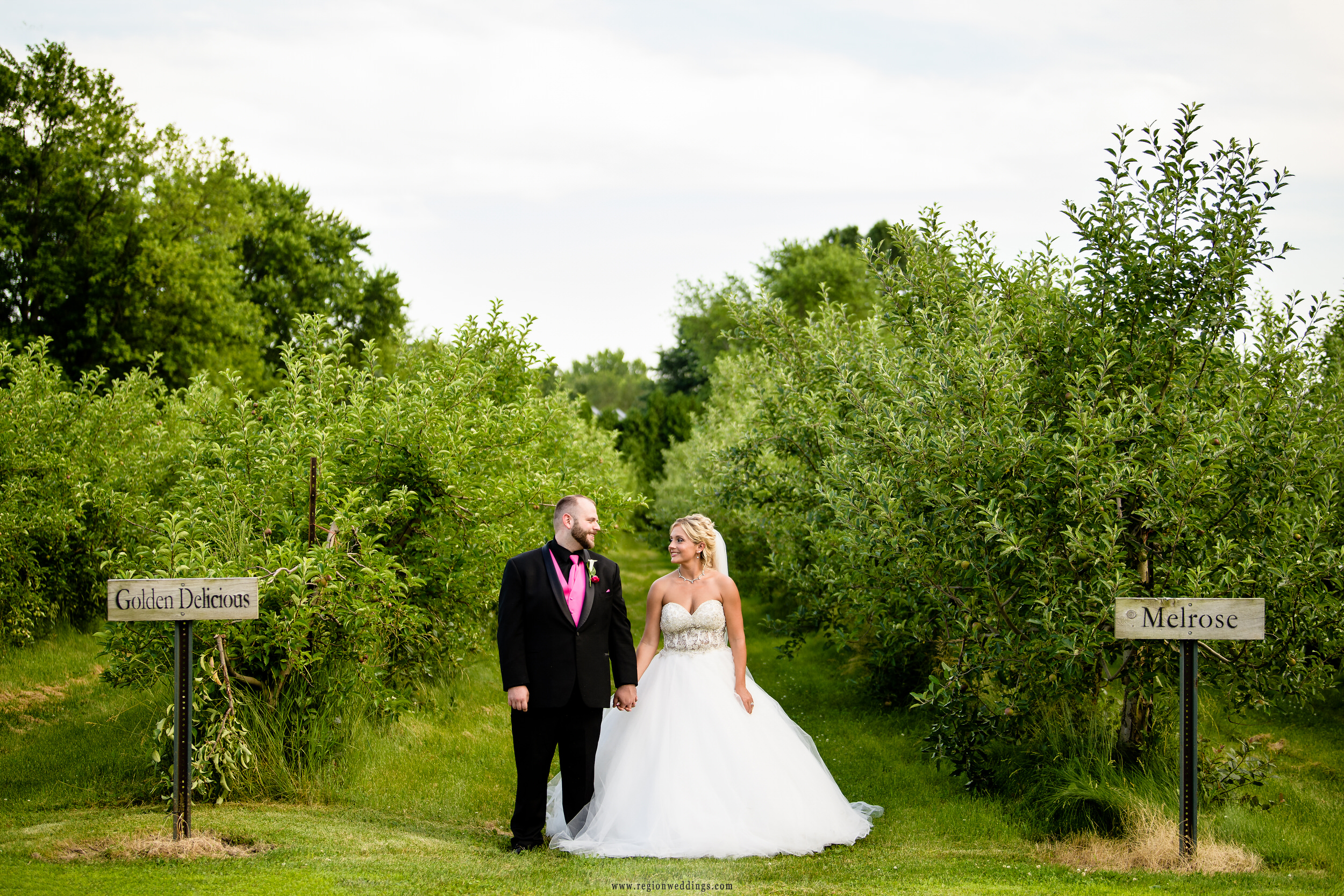 Bride and groom walk the apple orchards during their summer wedding.
