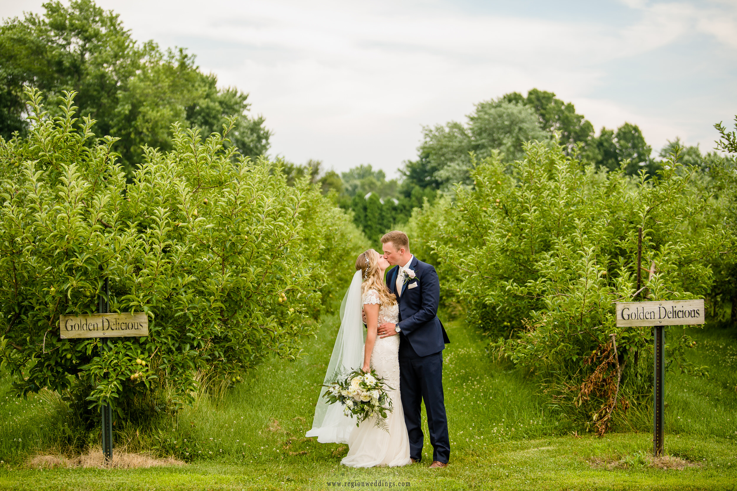The bride and groom choose golden delicious apples at County Line Orchard.
