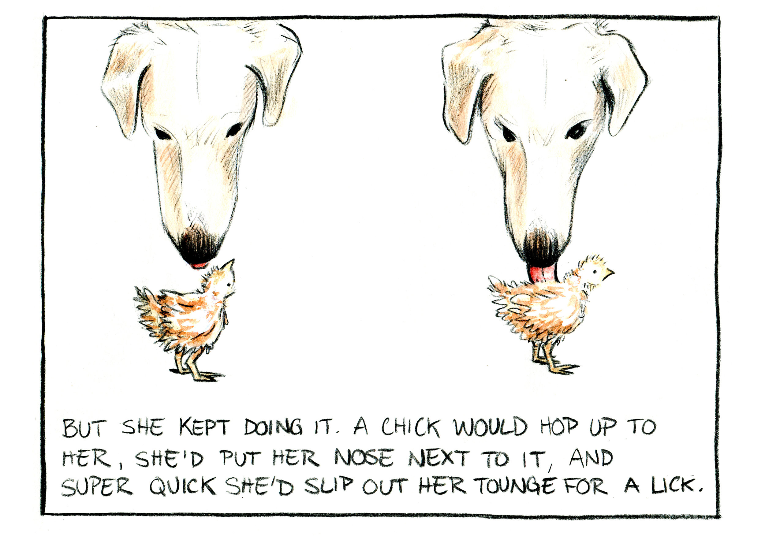 """""""Chicken Mama"""" Panel 11. Watercolor and pencil on Paper."""