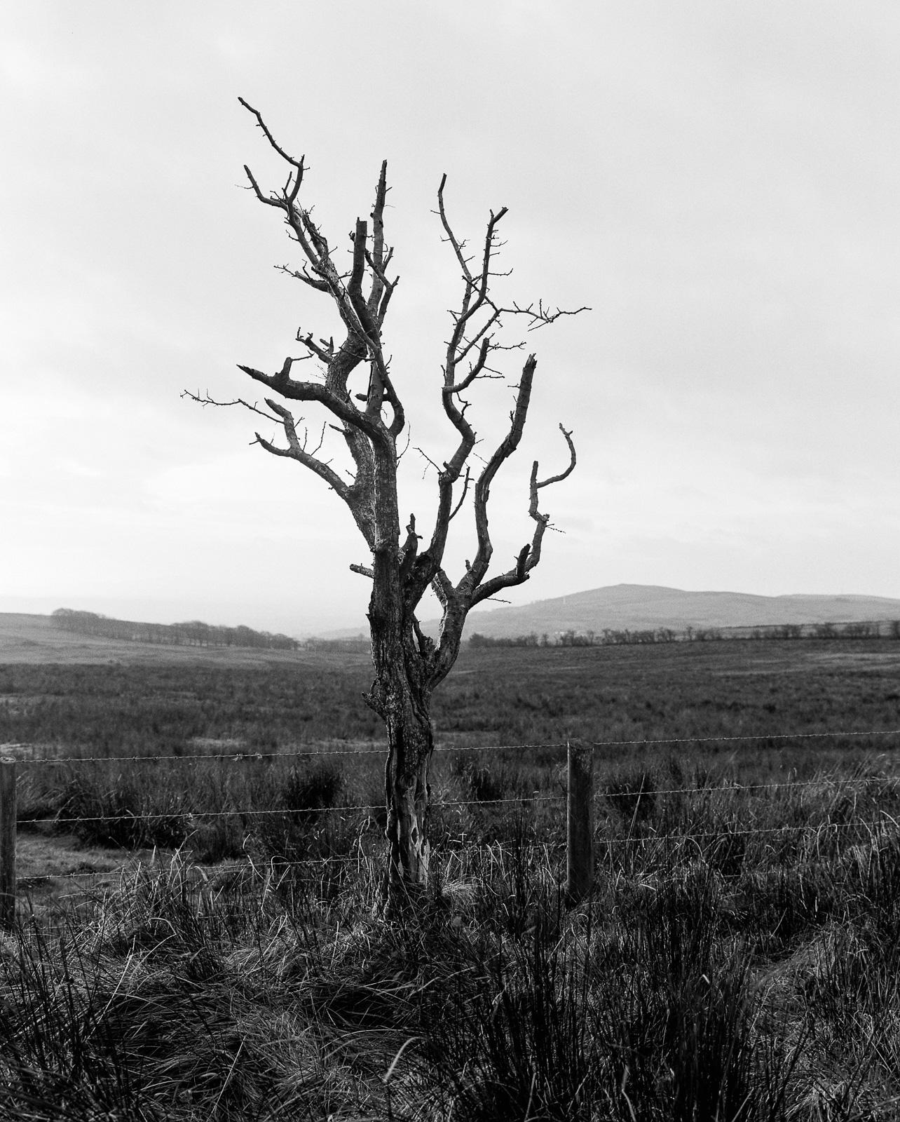 Hawthorn Tree No2 ©Laurence Gibson