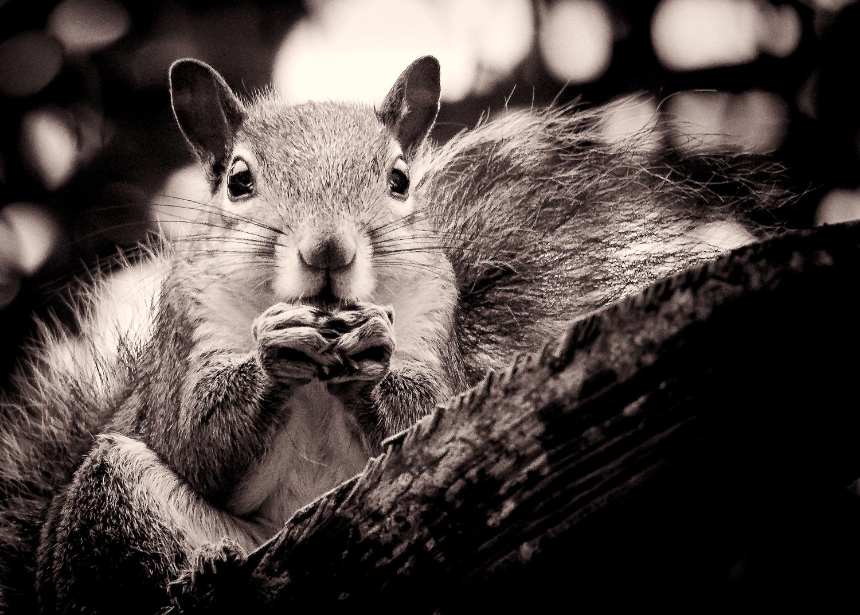 """Squirrel Boss"""