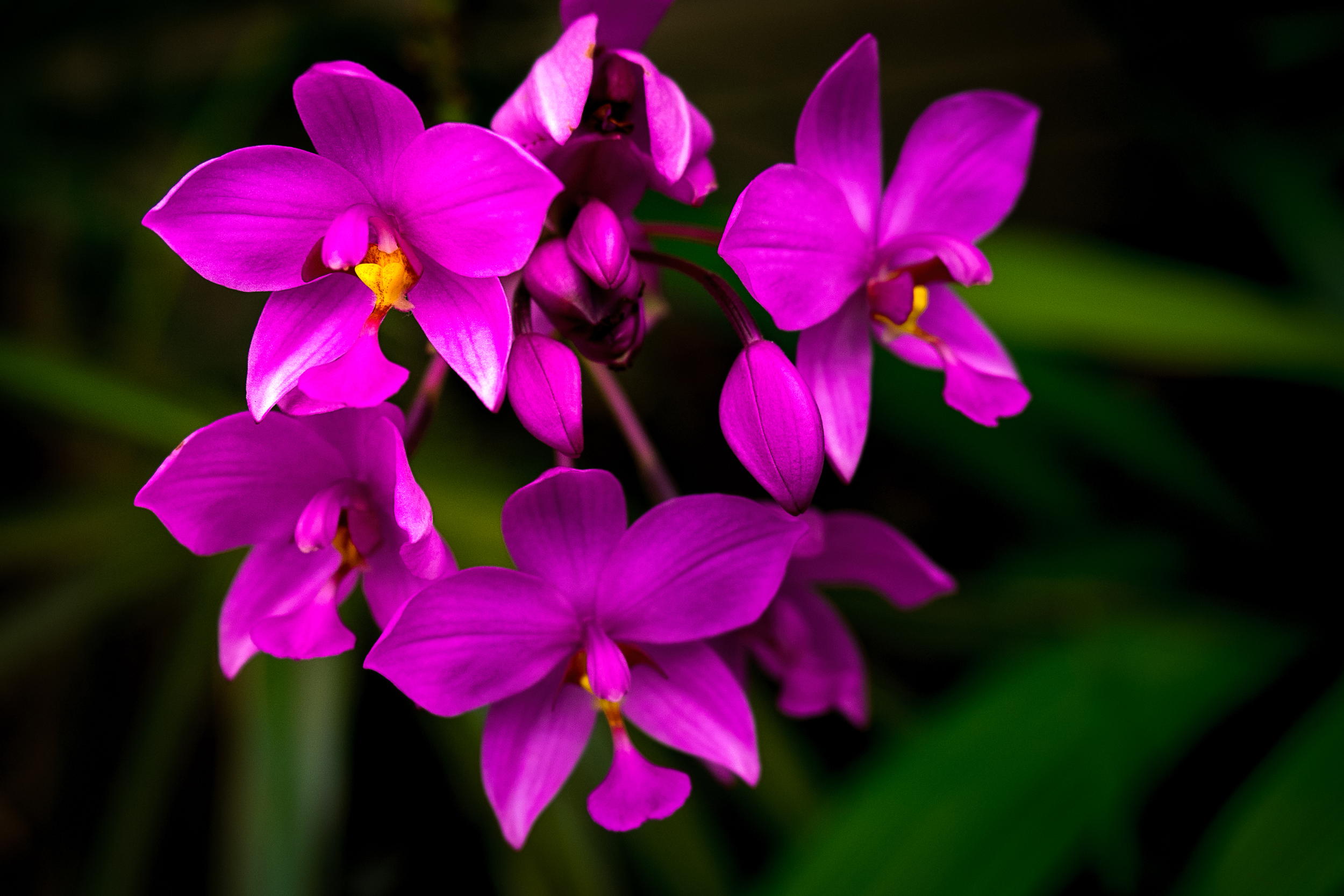 """Filipino Ground Orchids"""