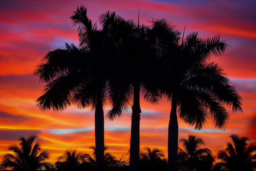 Blue Hour Palms