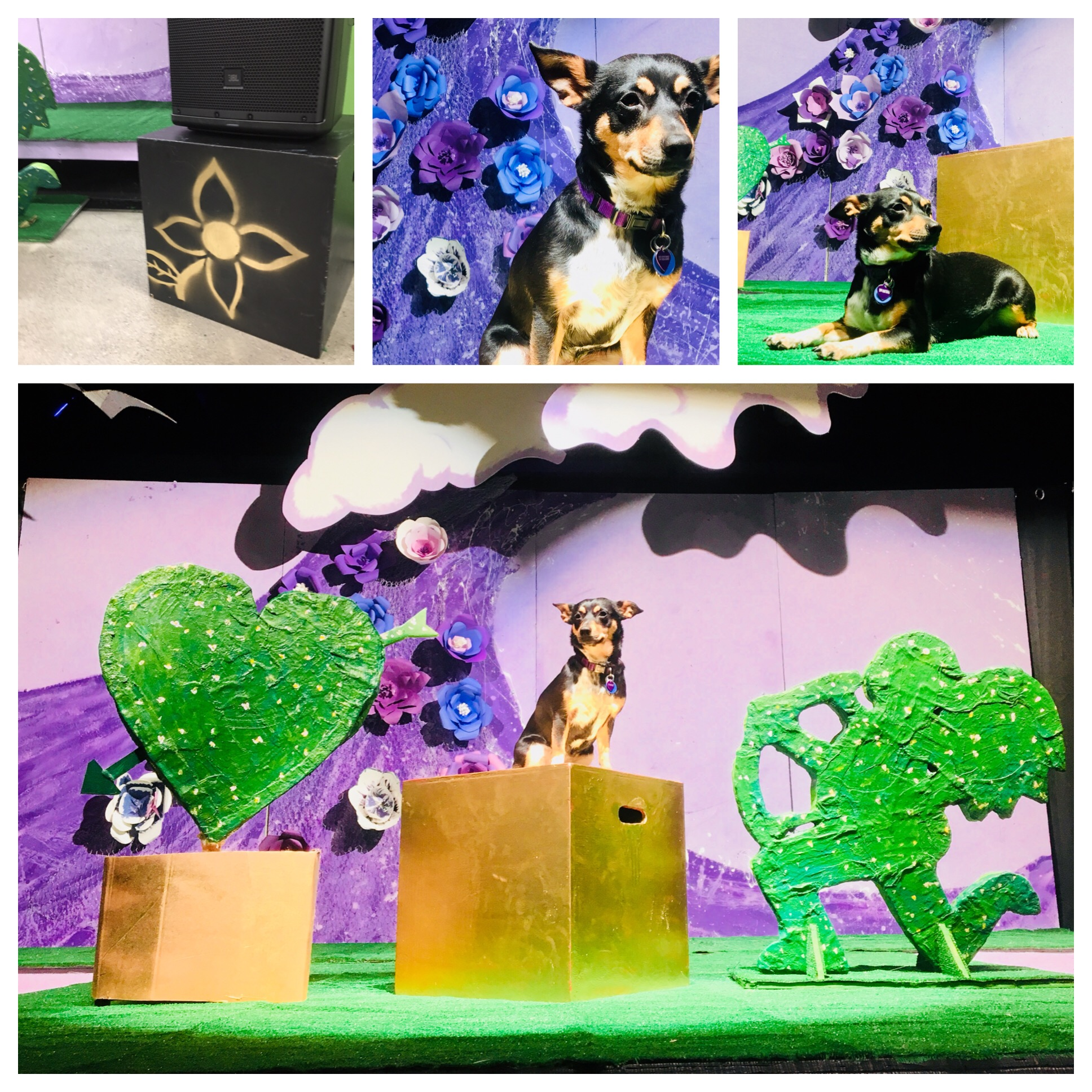 Set Design for '12th Night' at Alta Vista Middle School, May 2018 - Patrick and his wife Katie conceived, designed and built the set for the spring play with the help of several AVS students. Katie also directed. Junie the dog is the canine stand-in in the photos.