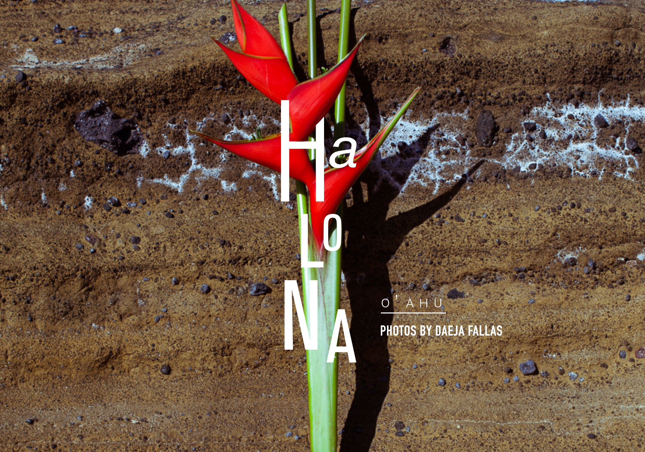 01-tiny-atlas-quarterly-graphic-oahu-daeja-fallas-L.jpg